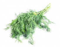 Dill Herb Royalty Free Stock Photography