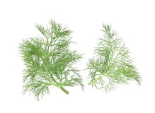 Dill herb leaves. Royalty Free Stock Photo