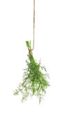 Dill herb leaves isolated on white. Food ingredient. Condiment Royalty Free Stock Photos