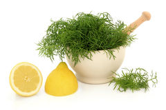 Dill Herb and Lemon. Dill herb leaf sprigs in a stone mortar with pestle and lemon fruit halves over white background Stock Photo