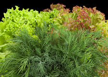 Dill herb with salad Royalty Free Stock Images