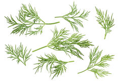 Dill herb set options path included isolated on white background Royalty Free Stock Images