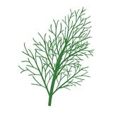 Dill icon Stock Photography