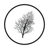 Dill icon. Thin circle design. Vector illustration vector illustration