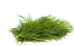 Dill isolated Royalty Free Stock Images