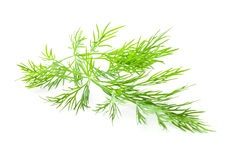 Dill isolated Royalty Free Stock Photography
