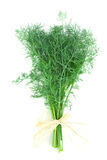 Dill isolated on white Stock Images