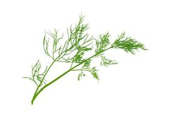 Dill isolated. Green dill isolated on white background Royalty Free Stock Photography
