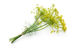 Dill isolated on white Stock Photos