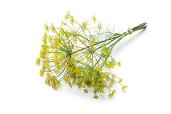 Dill isolated on white Stock Photography