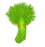 Dill isolated on white Royalty Free Stock Photo