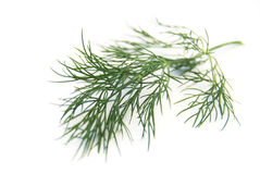 Dill leaf Stock Photos