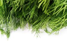 Dill Leaves Stock Image