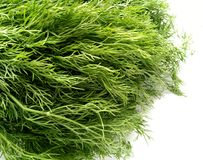 Dill Leaves Stock Photography
