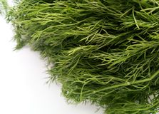 Dill Leaves Stock Photo