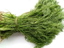 Dill Leaves Royalty Free Stock Photos
