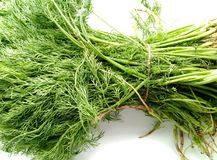 Dill Leaves Stock Images