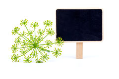 Dill with letter plate Royalty Free Stock Photo