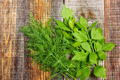 Dill and lovage Stock Photography