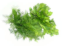 Dill and parsley. Are shown in the picture stock photography