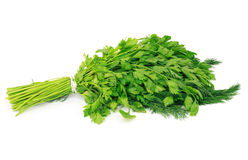 Dill and parsley Royalty Free Stock Photo