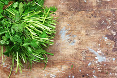 Dill and parsley Royalty Free Stock Images