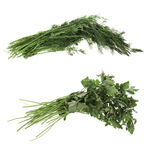 Dill, parsley, herbs, spices, Stock Image