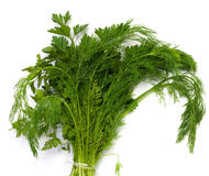 Dill and parsley at platw Stock Photography