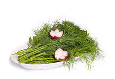 Dill, parsley and radishes Stock Photo
