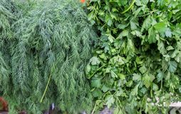Dill and parsley for sale at city market. Dill and parsley for sale at city farmers market royalty free stock photography