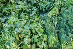 Dill and parsley for sale at city market. Dill and parsley for sale at local city market royalty free stock photo
