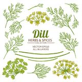 Dill plant elements vector set. On white background Royalty Free Stock Images