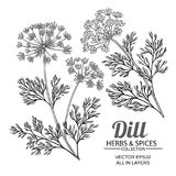 Dill plant vector set. On white background Stock Images