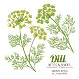 Dill plant vector set. On white background Royalty Free Stock Photography