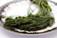 Dill on plate. And on white background Royalty Free Stock Images