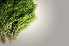 Dill with Roots. Dill with the roots lying on white background Stock Images