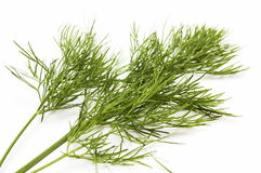 Dill for a salad Royalty Free Stock Photo
