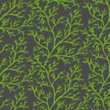 Dill seamless pattern Stock Photos