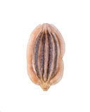 Dill seed. Closeup photograph of a dill seed isolated on white background Stock Photos