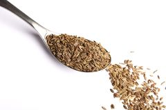 Dill seed Stock Image