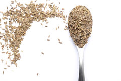 Dill seed Stock Photography