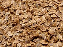 Dill seed texture Royalty Free Stock Photo