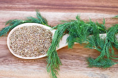 Dill Seed and Weed Stock Photo