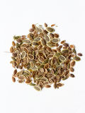 Dill seed Royalty Free Stock Images