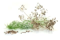 Dill seeds Stock Photo