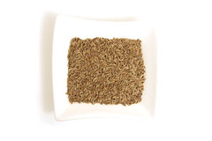 Dill seeds in square white bowl Royalty Free Stock Image