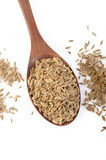 Dill seeds Stock Photography