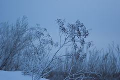 Dill snow against the  sky Stock Images