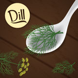 Dill on spoon Stock Images