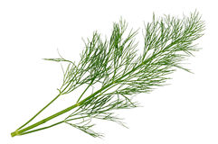 Dill sprig Stock Photos